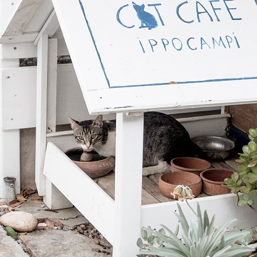 cat cafe ippocampi crete greece